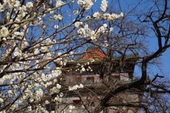 Wieżyczka i Śliwkowy kwiat Zdjęcie Royalty Free