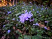 Wie über Blüten lizenzfreie stockfotos