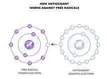 Wie Antioxydant gegen freie Radikale arbeitet Stockfoto