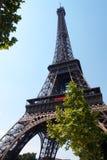 wieża eifla drzewa Obraz Stock