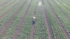 Wie Gemüse auf dem Feld wächst Tomaten, Zucchini, Gurken, Auberginen, Kartoffeln wachsen auf den Gebieten landwirtschaftlich stock footage