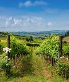wieś Italy Tuscany Obraz Royalty Free