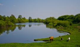 Wieś jezioro Obraz Royalty Free