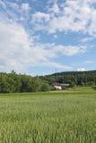 Wieś krajobraz Zdjęcia Stock
