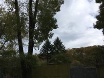Wieś krajobraz Drzewa, natura Obraz Royalty Free
