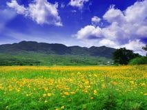 wieś kwiaty Obrazy Royalty Free