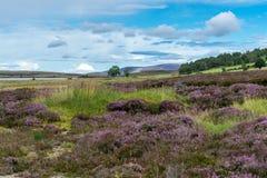 Wieś przy Lochindorb Fotografia Royalty Free
