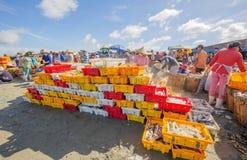 Świeża ryba w plastikowej tacy na plażowym pobliskim Długim Hai rybim rynku obraz stock