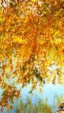 Wie Schnüre des Goldmünzebaumelns Überwasser Stockbild