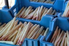 ?wie?y asparagus sprzedaje przy rynkiem obraz stock