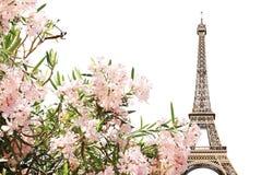 Wieży Eifla i menchii kwiaty Zdjęcia Stock