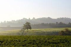 Wieś z drzewem w polu Fotografia Royalty Free