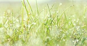 ?wie?a zielona trawa w wio?nie zbiory wideo