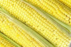Świeża kukurudza na cobs Zdjęcie Stock