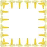 świeża kukurydzanych cobs rama Obrazy Royalty Free
