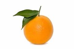 świeża pomarańcze Fotografia Royalty Free