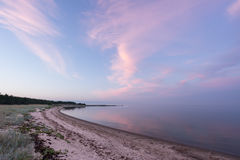Wieczór światło słoneczne i świerczyny drzewo na wybrzeżu, menchii chmurach i niebieskiego nieba tle, plażowy linii brzegowej hor Zdjęcie Royalty Free