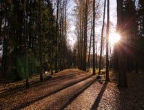 Wieczór aleja jesień przy Pavlovsk miastem Zdjęcia Royalty Free