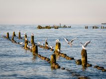 Wieczór bei morze Fotografia Royalty Free