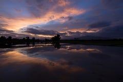 Wieczór czas na ryżowym polu w Tajlandia Obrazy Stock