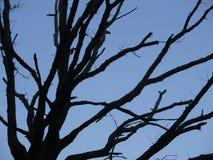 Wieczór drzewa niebieskie niebo Zdjęcia Stock