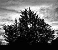 Wieczór drzewa w sylwetce w Nowa Zelandia obraz royalty free