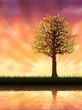 wieczór drzewo royalty ilustracja