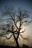 wieczór drzewo zdjęcia royalty free
