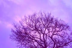 Wieczór drzewo w kraju Obraz Royalty Free