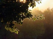 Wieczór las zdjęcie stock