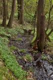 Wieczór lasowa zatoczka w wiosny naturalnej rezerwie Arba czeski regionu turystycznego Labske piskovce Obraz Stock