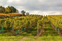 Wieczór na winnicach w republika czech chmurny Wina dorośnięcie kraju gór dolinny wino Obrazy Stock