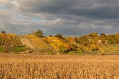Wieczór na winnicach w republika czech chmurny Wina dorośnięcie kraju gór dolinny wino Zdjęcie Stock
