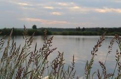Wieczór natura jeziorem na letnim dniu obraz stock