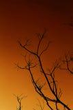 wieczór nieba drzewo Zdjęcia Royalty Free