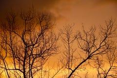 Wieczór niebo Fotografia Royalty Free