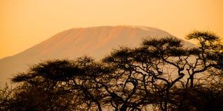 Wieczór sylwetka chująca za drzewami góra Kilimanjaro, Tanzania, Afryka Fotografia Stock