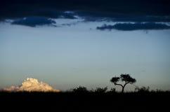 Wieczór w Afryka Fotografia Royalty Free