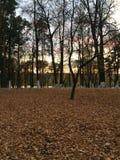 Wieczór w jesień parku Drzewa w złotym ulistnieniu Ramenskoe Obrazy Stock