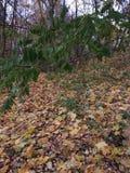 Wieczór w jesień parku Drzewa w złotym ulistnieniu Ramenskoe Zdjęcie Stock