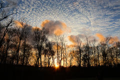 Wieczór w lesie Zdjęcie Stock