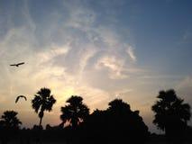Wieczór widok z drzewami i ptakami Fotografia Royalty Free