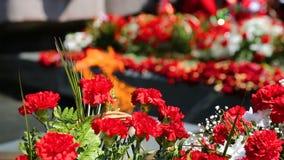 Wiecznie kwiaty ku pami?ci zwyci?stwa i p?omie? zdjęcie wideo
