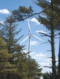 wiecznie zielone energetyczna Zdjęcia Stock