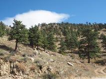 Wiecznozieloni drzewa na górze fotografia stock