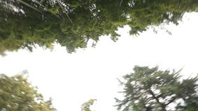Wiecznozielony bambus zasadza dolnego widok, odpoczynek w parku, tropikalne klimat rośliny zdjęcie wideo