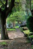 Wiecznozielony cmentarz Obraz Royalty Free
