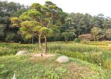Wiecznozielony drzewo w kraju parku Zdjęcie Royalty Free