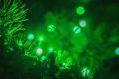 Wiecznozielony i bożonarodzeniowe światła Obraz Stock