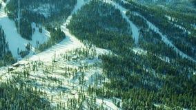 Wiecznozielony zima lasu horyzont zdjęcie wideo